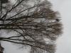 Plants-Trees_Photo_Texture_B_43030