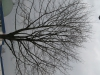 Plants-Trees_Photo_Texture_B_43040