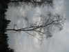 Plants-Trees_Photo_Texture_B_43150