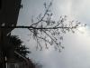 Plants-Trees_Photo_Texture_B_43300