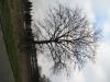 Plants-Trees_Photo_Texture_B_43510