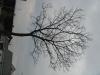 Plants-Trees_Photo_Texture_B_43520