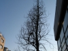 Plants-Trees_Photo_Texture_B_46840