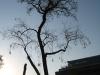 Plants-Trees_Photo_Texture_B_46990