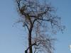 Plants-Trees_Photo_Texture_B_47010