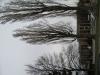 Plants-Trees_Photo_Texture_B_5695