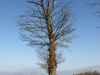 Plants-Trees_Photo_Texture_B_P1310335