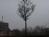 Plants-Trees_Photo_Texture_B_P2280897