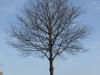 Plants-Trees_Photo_Texture_B_P3071195