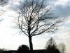 Plants-Trees_Photo_Texture_B_P4171325