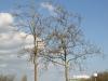Plants-Trees_Photo_Texture_B_P4171346