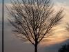 Plants-Trees_Photo_Texture_B_P4171365