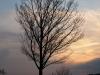 Plants-Trees_Photo_Texture_B_P4171371