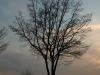 Plants-Trees_Photo_Texture_B_P4171378