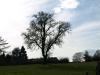 Plants-Trees_Photo_Texture_B_P4201544