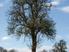 Plants-Trees_Photo_Texture_B_P4201548