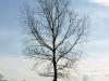 Plants-Trees_Photo_Texture_B_P4201559