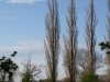 Plants-Trees_Photo_Texture_B_P4201574