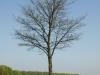 Plants-Trees_Photo_Texture_B_P4212531