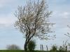 Plants-Trees_Photo_Texture_B_P4261817