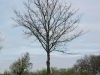 Plants-Trees_Photo_Texture_B_P4261825