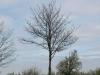 Plants-Trees_Photo_Texture_B_P4261826