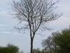 Plants-Trees_Photo_Texture_B_P4261828