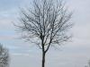 Plants-Trees_Photo_Texture_B_P4261830