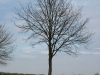 Plants-Trees_Photo_Texture_B_P4261833