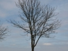 Plants-Trees_Photo_Texture_B_P4261837