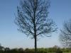 Plants-Trees_Photo_Texture_B_P5032329