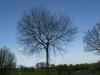 Plants-Trees_Photo_Texture_B_P5032330