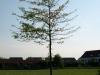 Plants-Trees_Photo_Texture_B_P5142789