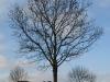 Plants-Trees_Photo_Texture_B_PC137648