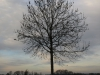 Plants-Trees_Photo_Texture_B_PC147675
