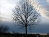 Plants-Trees_Photo_Texture_B_PC147676