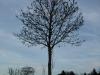 Plants-Trees_Photo_Texture_B_PC147680