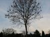 Plants-Trees_Photo_Texture_B_PC147683