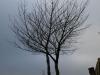 Plants-Trees_Photo_Texture_B_PC238025