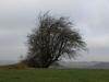Plants-Trees_Photo_Texture_B_PC238029