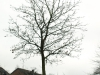 Plants-Trees_Photo_Texture_B_PC238092