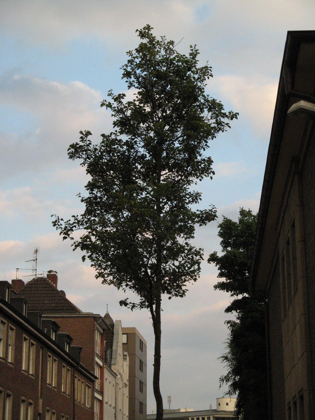 Plants-Trees_Photo_Texture_B_01680