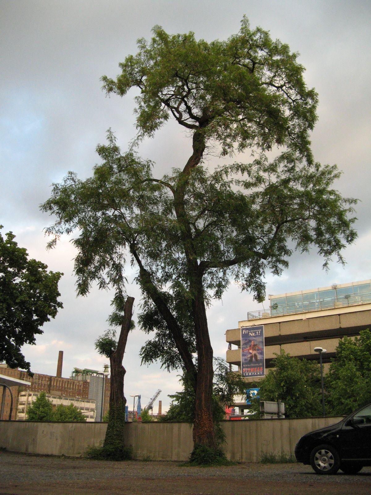 Plants-Trees_Photo_Texture_B_01690