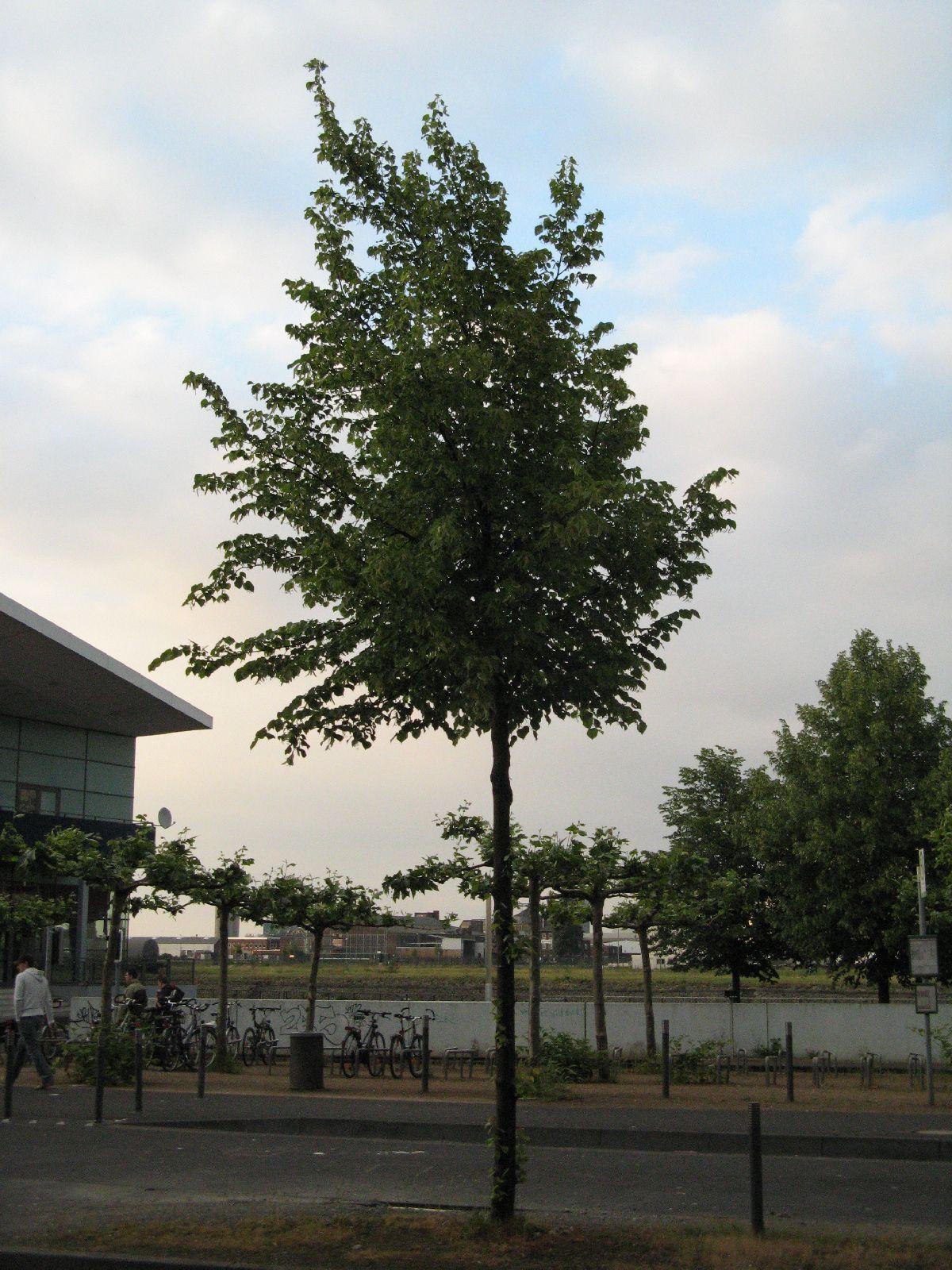 Plants-Trees_Photo_Texture_B_01710