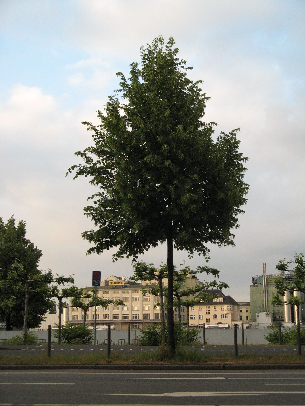 Plants-Trees_Photo_Texture_B_01720