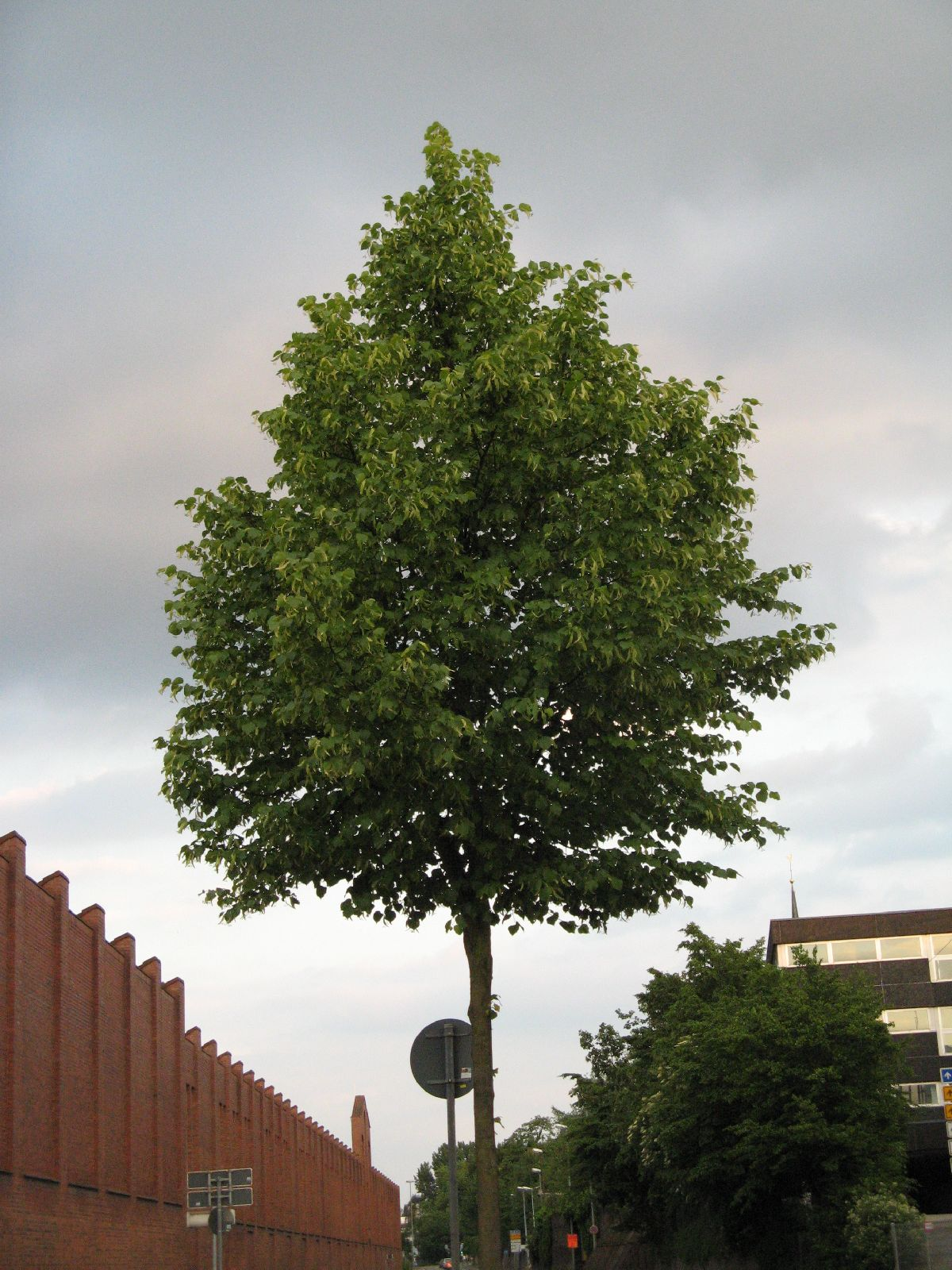 Plants-Trees_Photo_Texture_B_01740