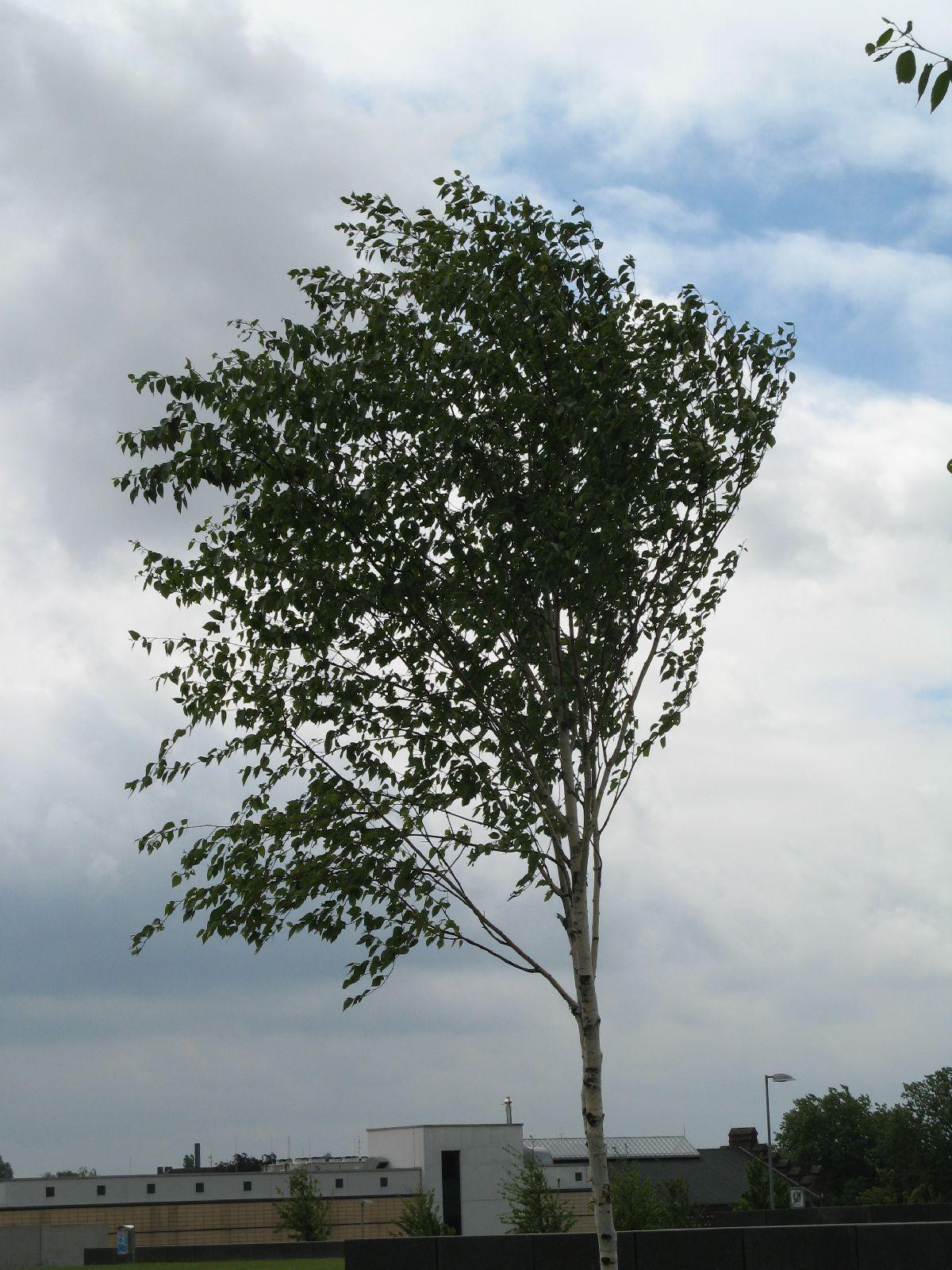 Plants-Trees_Photo_Texture_B_01900