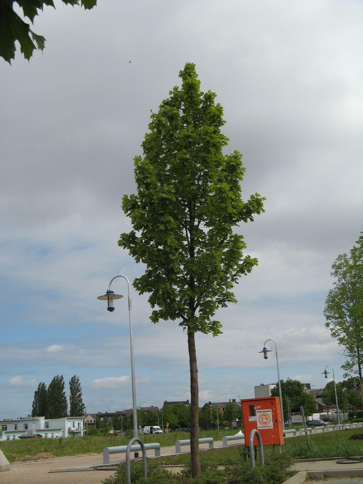 Plants-Trees_Photo_Texture_B_01970
