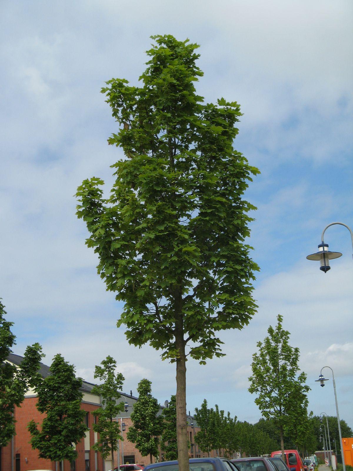 Plants-Trees_Photo_Texture_B_02010