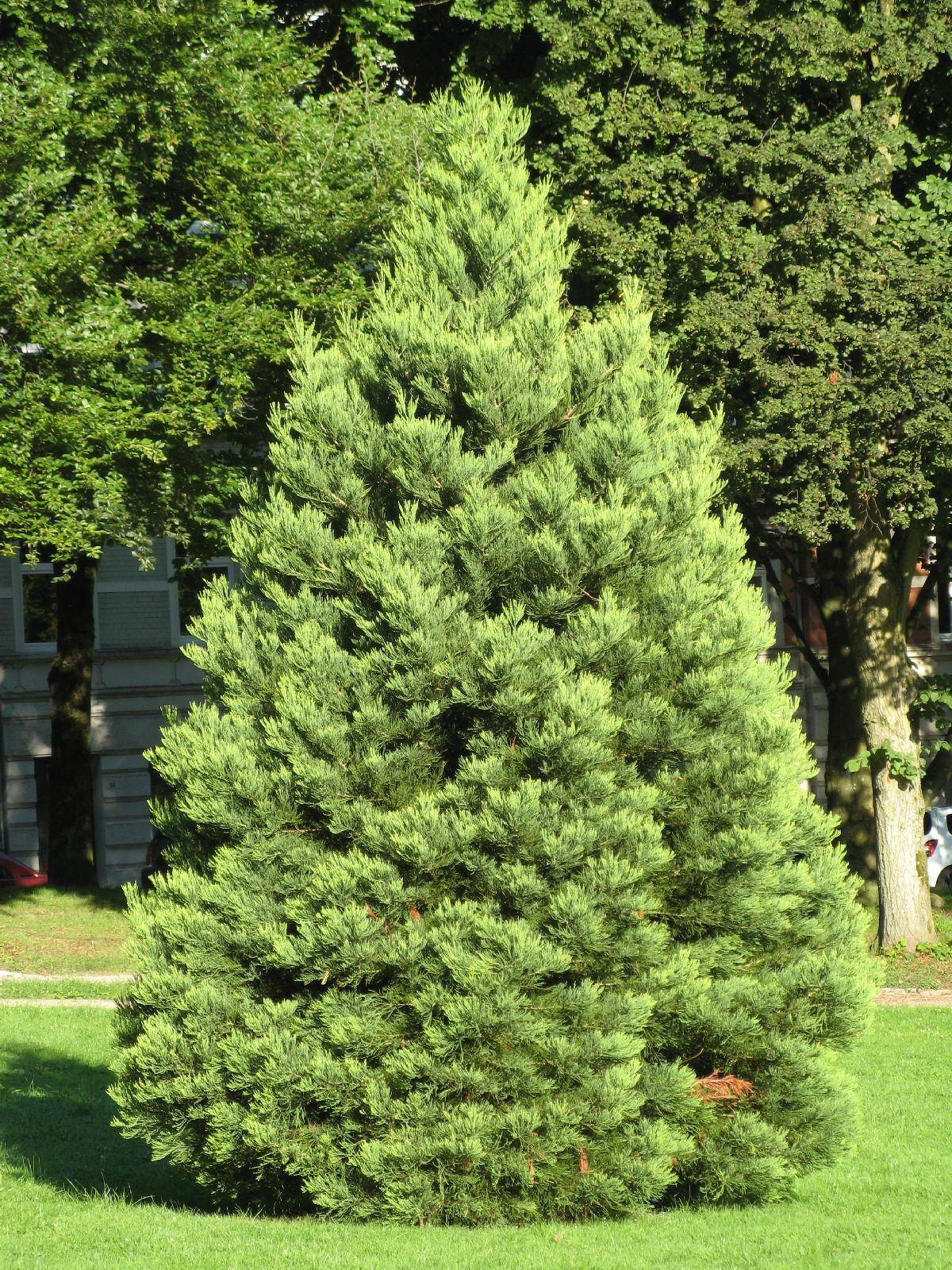 Plants-Trees_Photo_Texture_B_0215